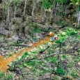 Serão necessárias medidas mais duras para enfrentar as reações e criar incentivos para a conservação para atingir a meta de redução do desmatamento até 2020. Reduzir o desmatamento para cerca […]