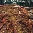 Um acordo político entre partidos governistas e a oposição prevê a votação do novo Código Florestal para a terceira ou quarta semana de abril. O adiamento da votação da lei […]