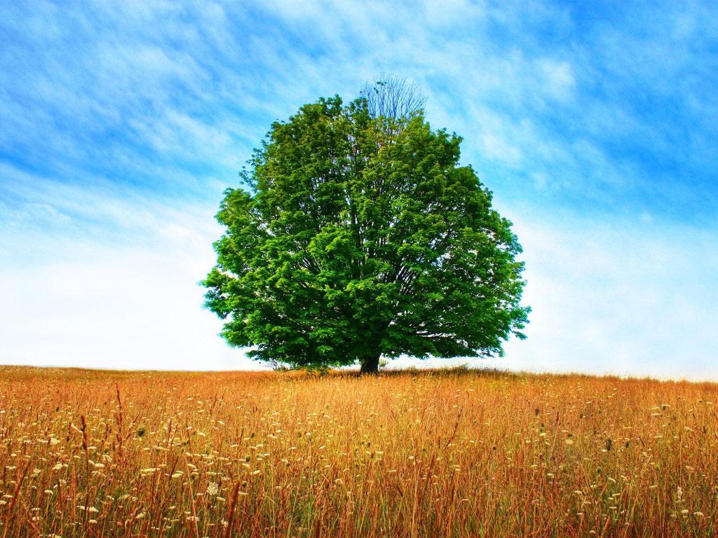 Brasil tem de desenvolver economia florestal, afirma Ricupero