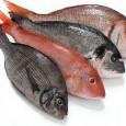 A rede de supermercados americana Whole Foods anunciou que irá parar de vender peixes e frutos do mar capturados de forma insustentável. A medida terá início a partir do dia […]