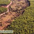 Um projeto brasileiro de reflorestamento foi o primeiro no mundo a receber Reduções Certificadas de Emissão temporárias (tRCEs) sob o Mecanismo de Desenvolvimento Limpo (MDL) do Protocolo de Quioto. O […]