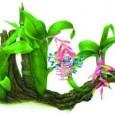 Livro com aquarelas da ilustradora botânica Dulce Nascimento mostra a beleza de uma profissão rara e importante. Segundo o Programa de Meio Ambiente da ONU, seis milhões de hectares de […]