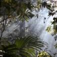 O debate sobre a legislação florestal passa agora para uma nova etapa, na opinião do representante do Banco Mundial no Brasil, responsável pela avaliação de projetos de sustentabilidade, Marco Antonio […]