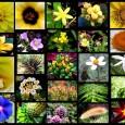 AUnião para o Biocomércio Ético (UEBT)divulgou nesta quarta-feira, 16/05, o estudoBarômetro de Biodiversidade 2012, que avaliou o nível de conhecimento e preocupação da população de oito países –Brasil, Índia, Peru, […]