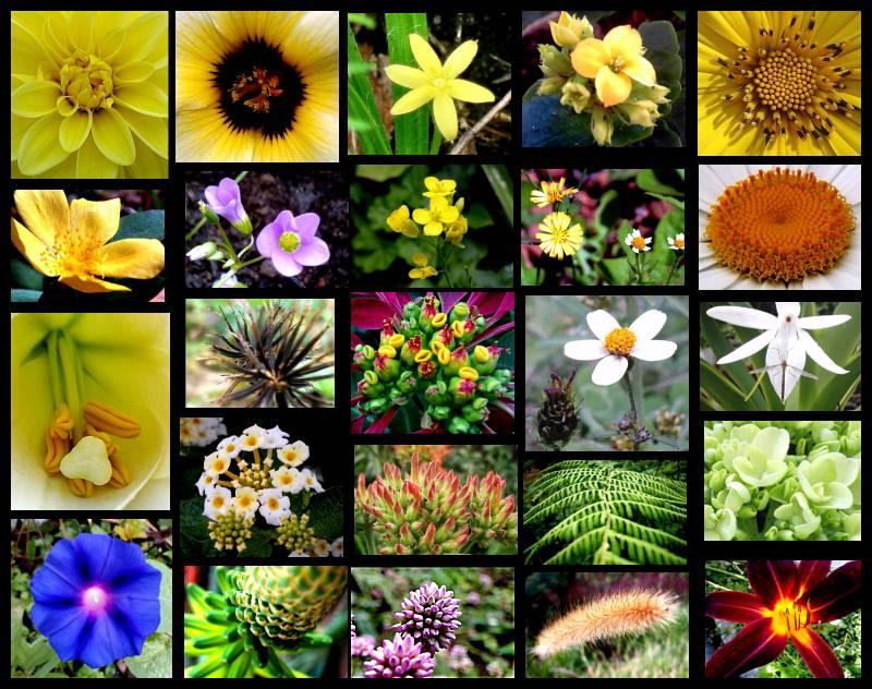 Brasileiros são os mais informados sobre biodiversidade