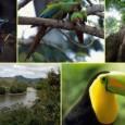 Os pesquisadores Fernando Vasconcelos e Danielle Calandino, do Fundo Brasileiro para a Biodiversidade (Funbio), identificaram 116 causas responsáveis pela perda da diversidade biológica brasileira. Durante dois meses, entrevistaram 40 gestores […]