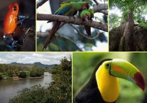 Brasil identifica perdas da biodiversidade