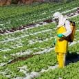 Há três anos o Brasil ocupa o primeiro lugar no ranking de consumo de alimentos contaminados poragrotóxicos no mundo. Em um terço desses produtos consumidoscotidianamente pelos brasileiros foi detectada a […]