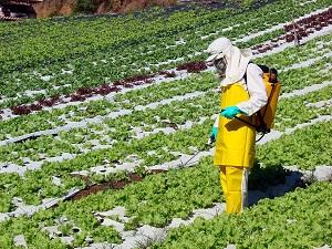 Alerta: Brasil ocupa 1º lugar no ranking de consumo de alimentos contaminados por agrotóxicos