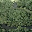 O governo federal sancionou parcialmente nesta sexta (25) o projeto de novo Código Florestal aprovado pelo Congresso no fim de abril, contrariando os apelos da maioria da sociedade brasileira, de […]
