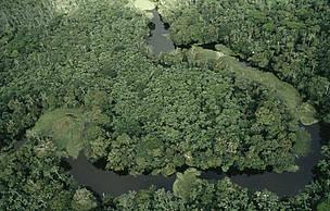 Governo ignora apelos da maioria dos brasileiros e sanciona parcialmente projeto para reforma do Código Florestal. Apenas veto integral traria possibilidade de debate democrático para regulamentação da lei atual.