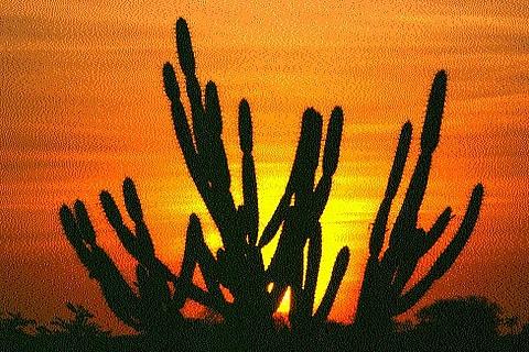 Caatinga ganha nova área de preservação