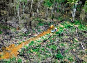Emissões do desmatamento dependem do destino das árvores derrubadas