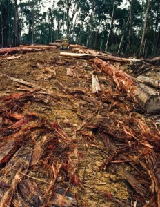 13 Razões para o veto total do PL 1876/99 do Código Florestal