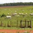 Uma pecuária certificada e sustentável? Algo inimaginável há muito pouco tempo começou a tomar forma, pelo menos com um exemplo que poderá dar nova fisionomia a um dos setores mais […]