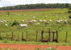 Criação de gado extensivo no Mato Grosso: setor é um dos mais criticados pelos ambientalistas. Foto: Roosewelt Pinheiro/Abr
