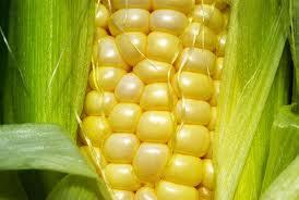 Quando os biocombustíveis roubam a comida