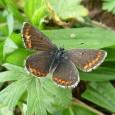 As mudanças climáticas causadas pelo aquecimento global já causam impacto em uma espécie de borboleta, que era considerada rara até os anos 1980. E esse impacto, para ela, é positivo. […]