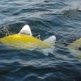 Universidades europeias que participam do chamado projeto Shoal desenvolveram um peixe-robô que analisa a qualidade da água onde nada em tempo real. A tecnologia empregada reduz o tempo que se […]