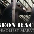 No dia 12 de abril, a PETA divulgou que há 15 meses vem investigando, em cinco estados americanos, uma grande operação que envolve crueldade cometida conta pombos. Os documentos revelam […]