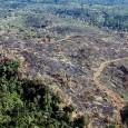 Se a mata atlântica tem inimigos, boa parte deles está em Minas Gerais. Cerca de metade dos 13,3 mil hectares desmatados nesse bioma em 2011 está em terras mineiras. Os […]