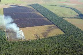 Comunidade internacional comenta veto parcial a novo Código Florestal brasileiro