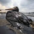 A Petrobrás se envolveu em um incidente no Golfo do México no domingo, mas ocultou o fato de seus acionistas e da imprensa. Segundo dados da Guarda Costeira dos Estados […]