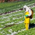 O ministro do Desenvolvimento Agrário, Pepe Vargas, disse sábado (16) que o Brasil precisa diminuir a quantidade de agrotóxicos utilizados na agricultura. A afirmação foi feita durante visita à Cúpula […]