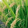 Quando se trata de expressar a ameaça que o aquecimento do planeta e os eventos climáticos extremos representam para a segurança alimentar, o Banco Asiático de Desenvolvimento (BAsD) vai direto […]