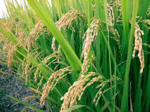 Mudança climática ameaça alimentação no Sri Lanka
