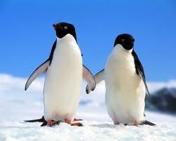 'Depraved' Sex Acts By Penguins Shocked Polar Explorer