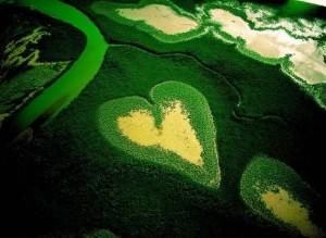 Teste seus conhecimentos sobre temas ambientais