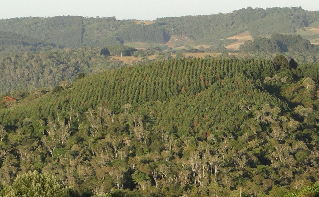 Reflorestamento amplia alternativas de renda para o produtor rural