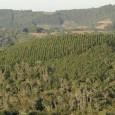 Além da integração entre pasto e lavoura, o produtor rural tem o reflorestamento como opção sustentável para a recuperação de áreas degradadas. Para o engenheiro agrônomo Ronaldo Crescente, com a […]