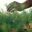 Projetos de agricultura e pecuária de baixo carbono, implantados pelos produtores com a devida orientação e acompanhamento, poderão gerar créditos negociáveis no novo Mercado Agropecuário de Redução de Emissões (MARE), […]
