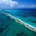 Na opinião de Leandra Gonçalves, coordenadora do Programa Costa Atlântica da SOS Mata Atlântica, os oceanos são bastante relevantes e poderiam ganhar um pouco mais de atenção da sociedade e […]