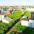 Em junho, um acordo entre a BrightFarms, da Lightfoot´s company, com a The Great Atlantica and Pacific Tea Co anunciou que vegetais cultivados em fazendas urbanas de Nova Iorque vão […]
