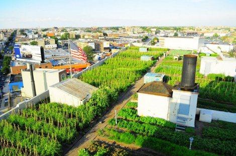 Cultivo no topo dos prédios vira negócio sério nos EUA