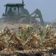 Preços recordes dos cereais estão provocando temores de custos crescentes de alimentos e levando a comparações com a crise de 2007-08, quando distúrbios eclodiram em todo o mundo. Enquanto o […]
