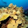A maior parte dos corais do mundo prospera em zonas marinhas pouco profundas, às quais chega a luz que precisam para crescer. Contudo, o acelerado aumento do nível do mar, […]