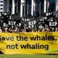 """A 64a Comissão Baleeira Internacional (CBI) terminou hoje no Panamá. John Frizell, coordenador da Campanha de Baleias do Greenpeace Internacional, disse que """"mais uma vez, a conservação das baleias na […]"""