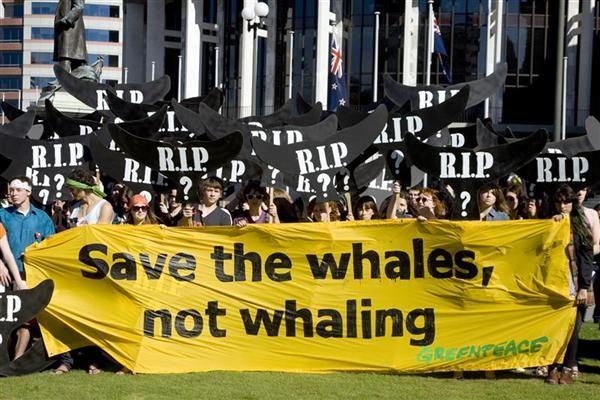 Em protesto na Nova Zelândia, ativistas pedem o fim da caça às baleias © Marty Melville/Greenpeace