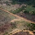 AAgência Espacial Europeia divulgou nesta sexta-feira uma animação que mostra a evolução do desmatamento no Estado de Rondônia, de 1986 a 2010. Uma das regiões mais afetadas pelo desmatamento no […]