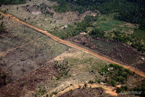 Vista aérea de floresta amazônica devastada perto de Porto Velho, capital do Estado de Rondônia, uma das regiões mais afetadas pelo desmatamento. (©Greenpeace/Marizilda Cruppe)