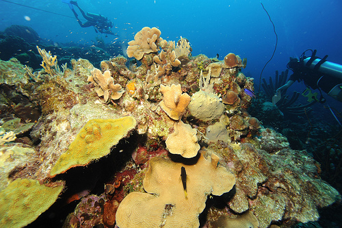 A vida marinha é tema central da Expo 2012. Foto: Living Oceans Foundation