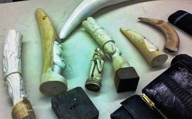 Marfim apreendido em Los Angeles em junho. (Foto: US CBP/Divulgação)