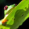 Metade das áreas protegidas de florestas tropicais do mundo está sofrendo um declínio na biodiversidade, segundo uma análise feita em 60 reservas e publicada na edição desta semana da revista […]