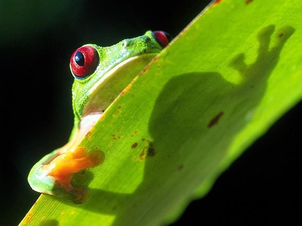 Reservas são o último refúgio de espécies ameaçadas (Foto: Christian Ziegler/ZieglerPhotos.com/Nature)