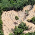 Uma extração industrial de madeira em florestas tropicais primárias que seja sustentável e rentável é impossível, argumentaum novo estudona Bioscience, que detalha como as características das madeiras tropicais tornam uma […]