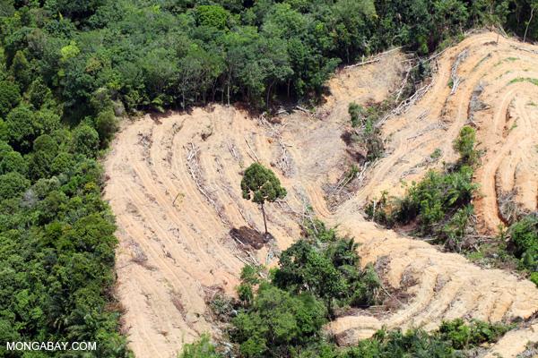 Especialistas: extração sustentável em florestas tropicais é impossível